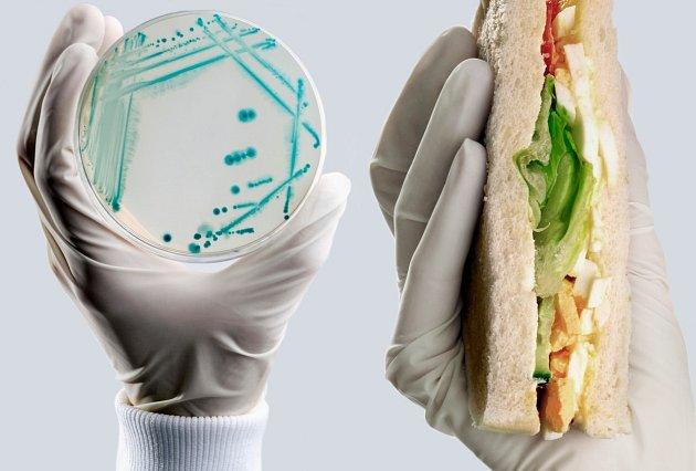 V létě hrozí otrava jídlem nejvíce