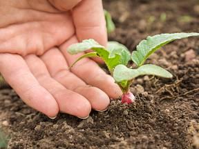 Co pěstovat na podzim?