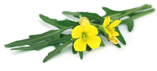 Květy křezu jsou chutné, zdravé a velmi ozdobné