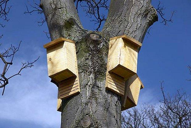 budky pro netopýry