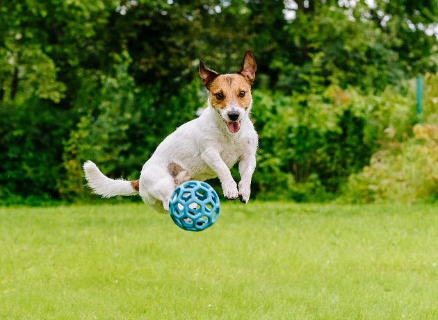Při výběru míčku pro psa hledejte nejen vhodnou velikost, ale také barvu.