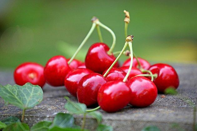 Třešně jsou oblíbeným letním ovocem
