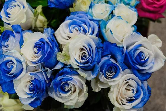 Obarvené růže