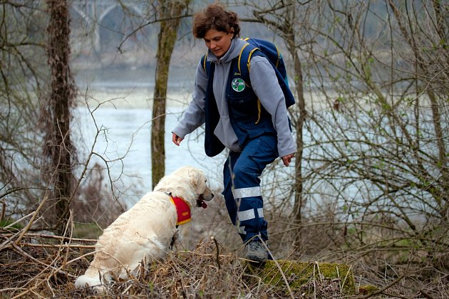 Mantrailingu se mohou věnovat prakticky všechna plemena psů.