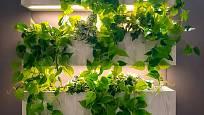 Existuje docela obsáhlá skupina pokojových rostlin, které se spokojí i s málem světla.
