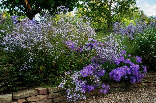 Astry se postarají o kouzelnou podzimní zahradu. Odrůdy 'Silver Spray' a ' King George_797353705