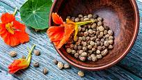 Semena lichořeřišnice