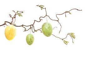 kraslice zavěšené na větvi kroucené vrby nebo lísky vypadají báječně