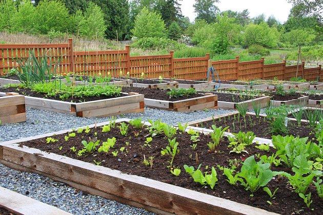 Originální zeleninová zahrada