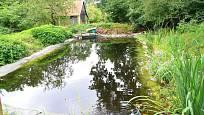 Čerstvě založené koupací jezírko s podélnou rostlinnou zónou a velkým prostorem pro plavání