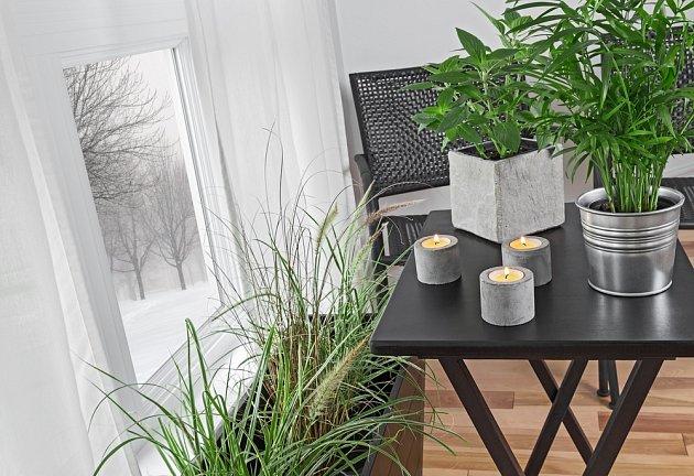 Puklice napadají pokojové rostliny nejčastěji v zimě.