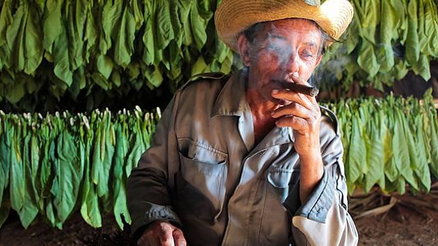 tabák