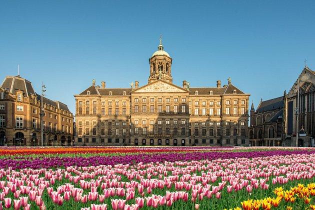 Třetí lednovou sobotu patří náměstí Dam tulipánům