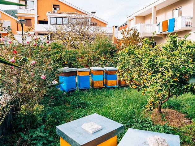 Uly v zahrade