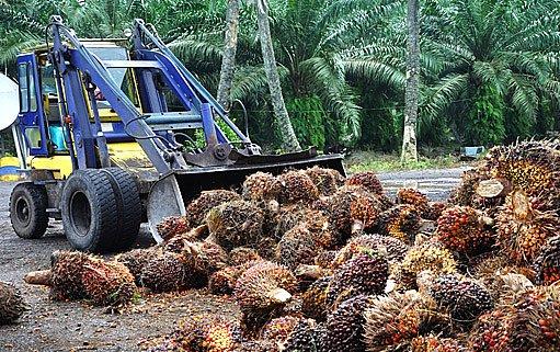 zpracování palmového oleje na biopalivo