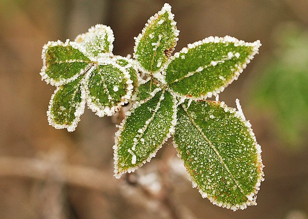 Pokud 17. března mrzne, bude mrznout ještě celý měsíc