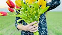 K řezu jsou nejvhodnější tulipány s dlouhými stonky.