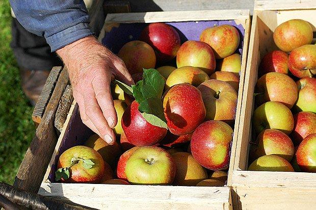 Ukládáme  pouze zdravé, zralé plody
