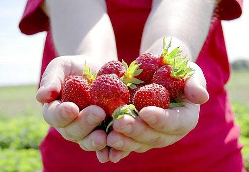 Vlastnoručně sesbírané jahody