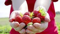 Vlastnoručně sesbírané jahody.