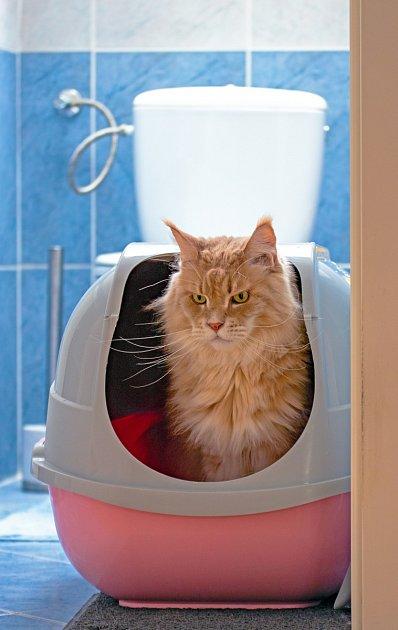 Máme-li doma více koček, každá z nich  by měla mít svou toaletu.