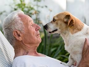 Je třeba poznamenat, že přátelská povaha neznamená, že zvíře není schopno ochránit majitele a jeho rodinu.