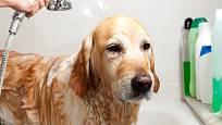 Péče o psí srst zahrnuje i koupání psa a používání speciálních přípravků.