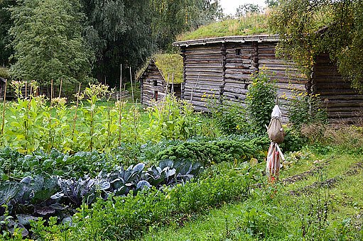Strašák střeží zeleninovou zahrádu