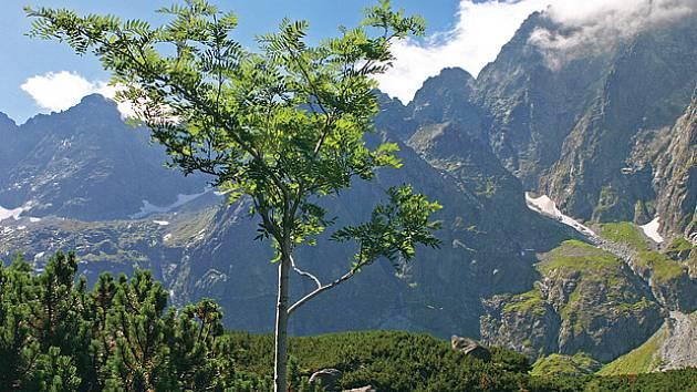 Letní den na rozhraní Bielovodskej a Litvorovej doliny