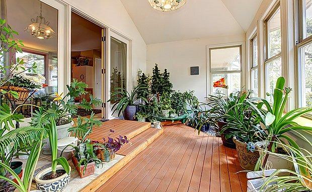 V zimě potřebují pokojové rostliny co nejvíce světla