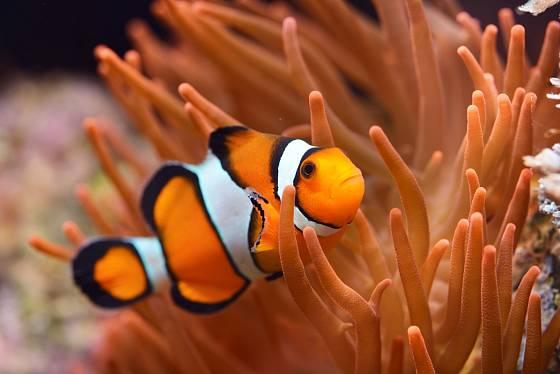Díky mořskému akváriu můžeme pozorovat nádherné druhy ryb.