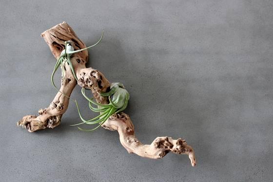 Naplavené dřevo jako podklad pro pěstování rostlin.
