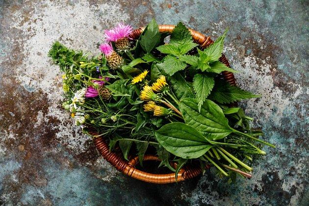 Pojmem divoké byliny označujeme jedlé rostliny, které jsou většinou považovány za plevele.