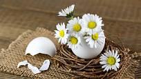 Z vaječné skořápky můžeme vyrobit miniaturní vázičku pro sedmikrásky.