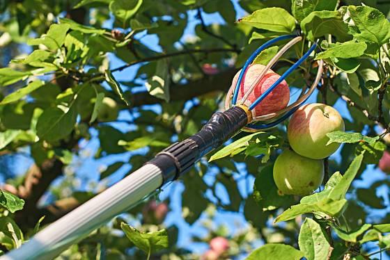 Trháčky na ovoce mají různou podobu