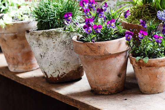 Květináče s vápenatým výkvětem osaďte některým ze tradičních druhů květin a vystavte ve vintage zahradě.