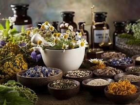 Jaké bylinky jsou vhodné při prevenci či samotné léčbě?