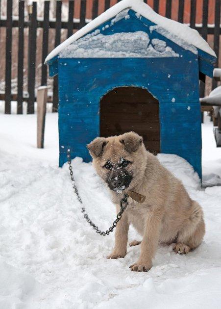 Pes, který je celoročně venku by měl mít zateplenou boudu.