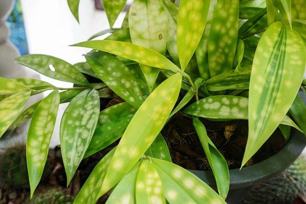 Změna barvy listů často upozorňuje na problém se škůdci nebo některou z chorob.