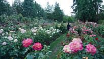V rozáriu si můžete růže prohlédnout a také k nim přivonět