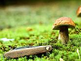 Sbírání hub