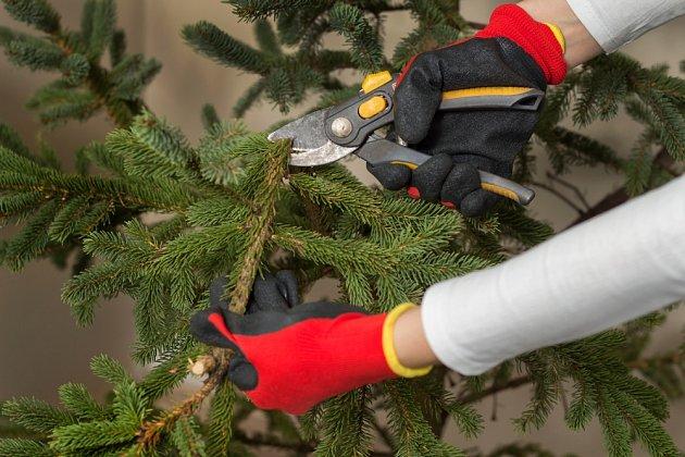 Větvičky z vánočního stromku poslouží jako zimní ochrana choulostivých rostlin v zahradě.