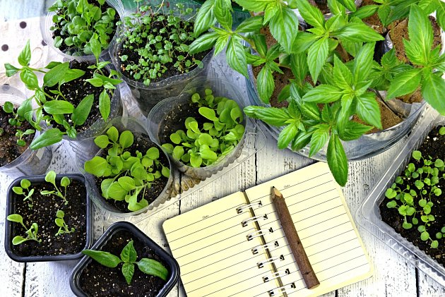 Zápisník může provázet pěstované rostliny od semínka