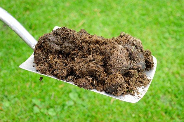 Hnůj patří mezi oblíbená organická hnojiva.