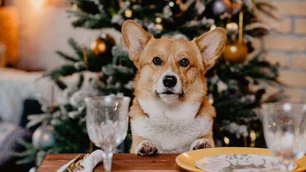Jak nepokazit svátky zvířecím mazlíčkům?