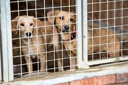psi čekají na plnou misku