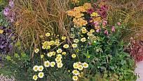 Záhonu suchomilných trvalek: rmen, řebříček, třapatka, okrasné trávy
