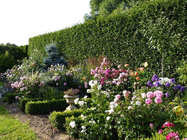 Takto vypadá růžová zahrada v létě