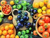Rajčata můžete pěstovat nejen v různých velikostech, ale i barvách a chutích
