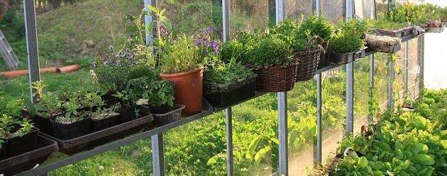 Už časně zjara můžete pěstovat zeleninu i sazeničky květin a bylinek